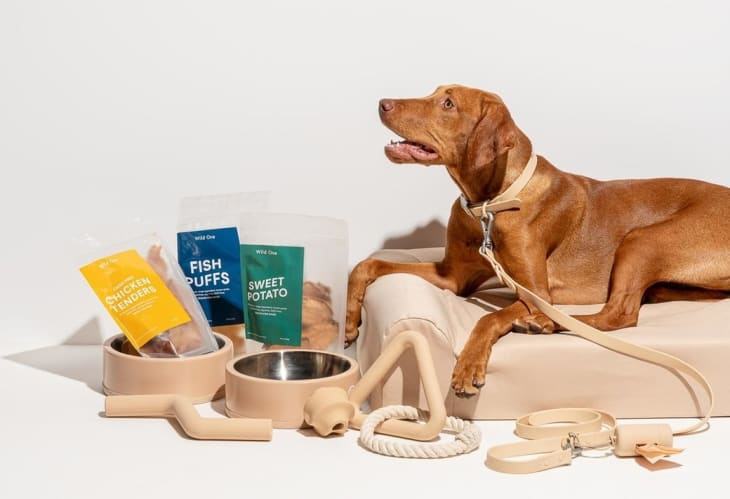dog bowls and treats next to dog relaxing in bed
