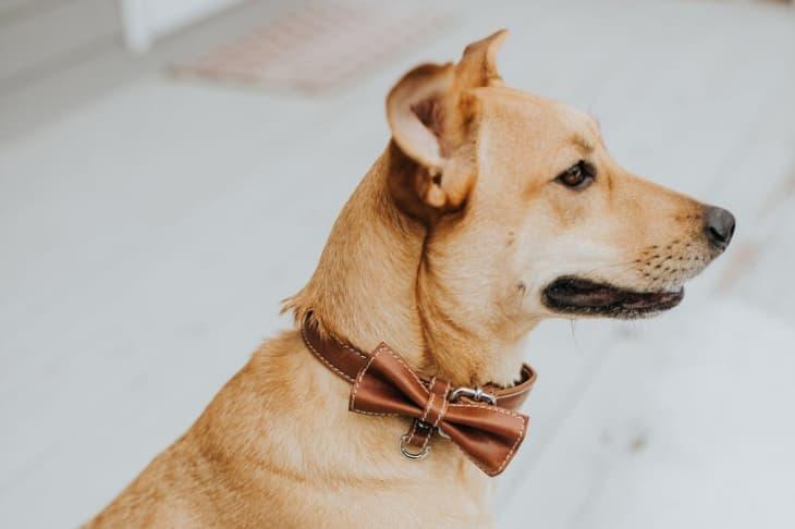 Product Image: The Leather Expert Dog Collar