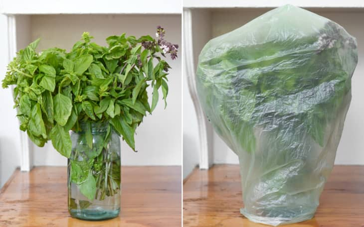 The Best Way To Keep Basil Fresh Kitchn