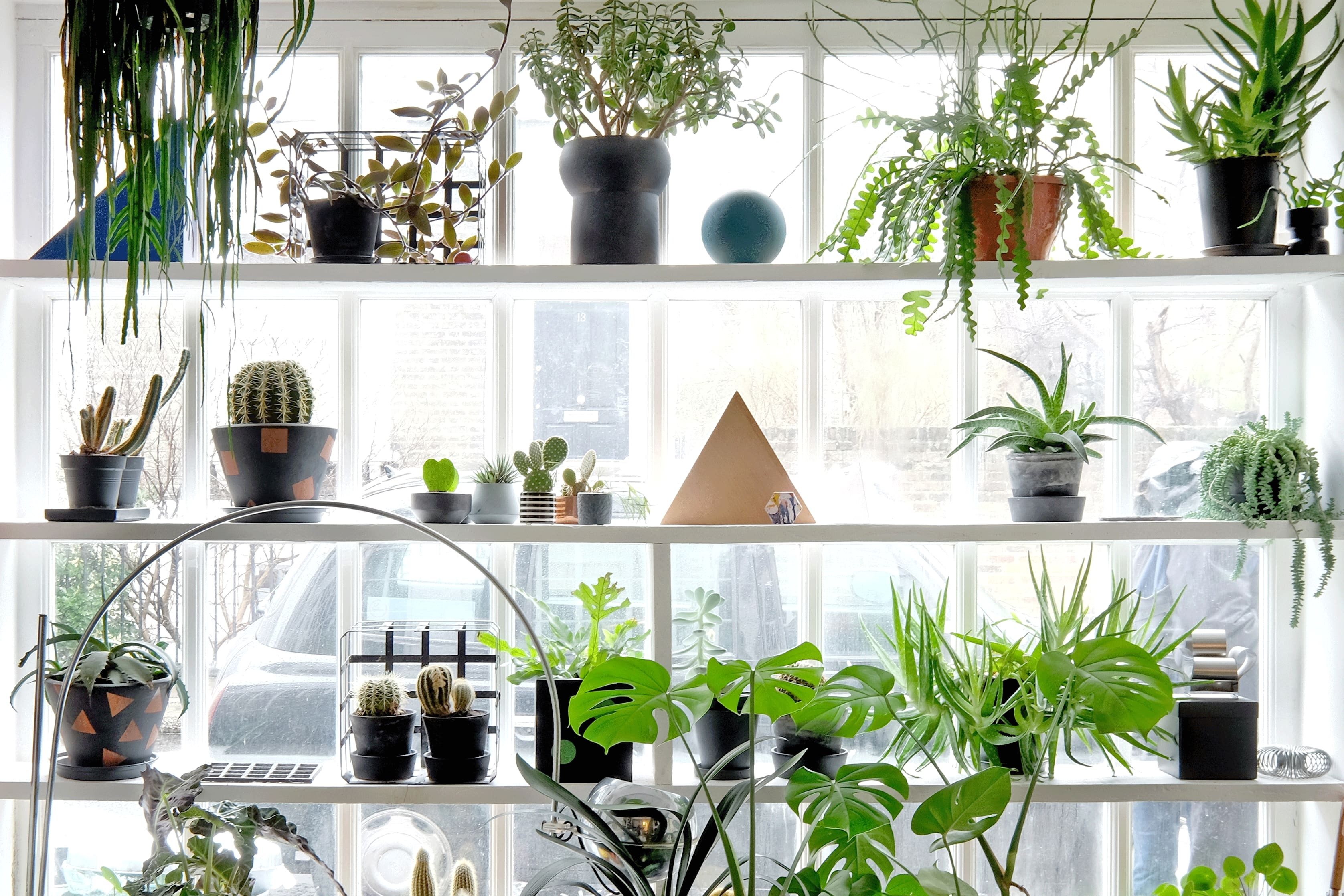 6 Unique Houseplants to Grow at Home