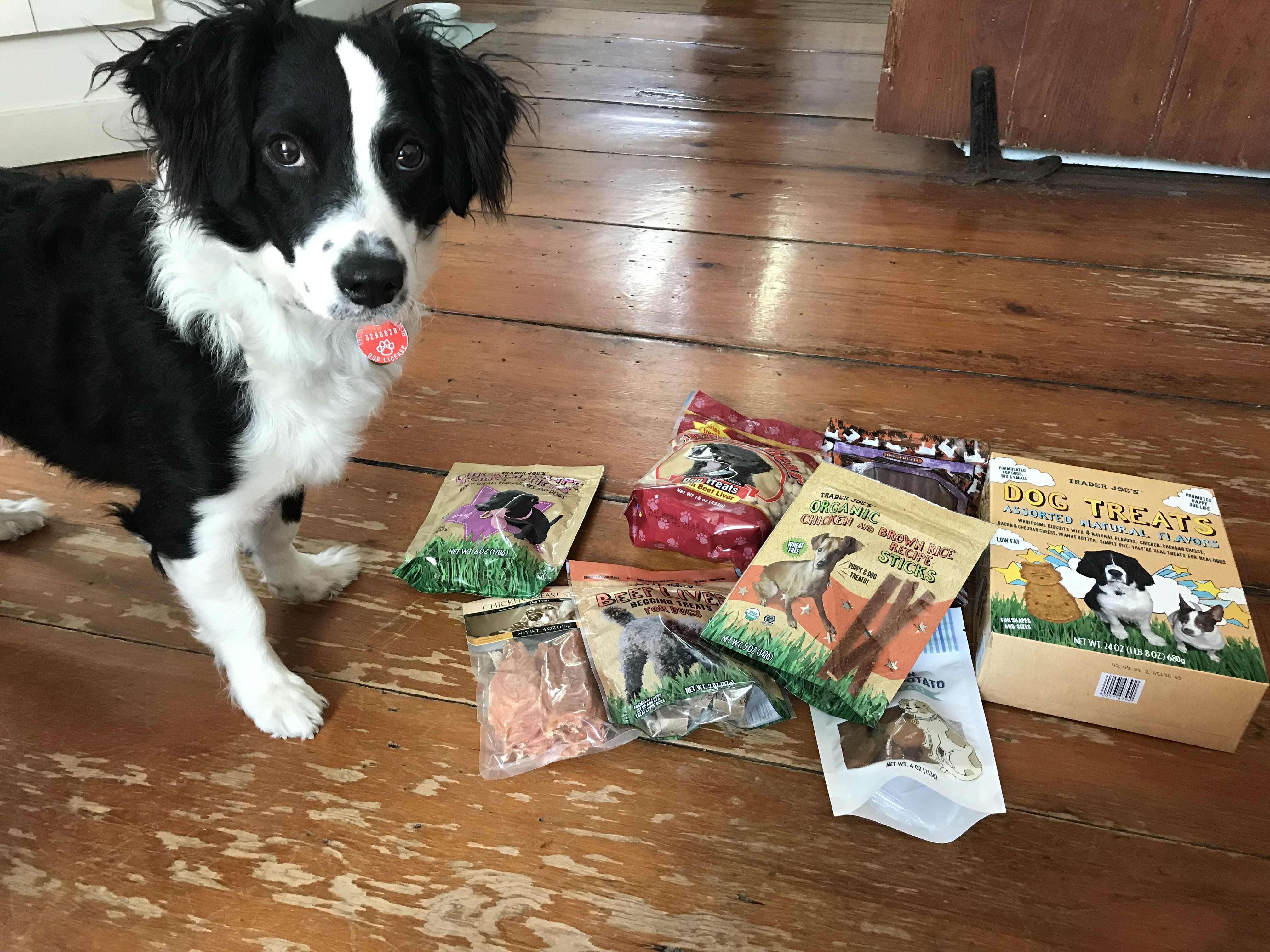 5 of the Best Dog Treats at Trader Joe's, According to My Very Discerning Pup