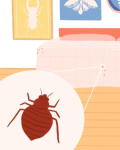 Insect Pest Solutions Apartment Therapy