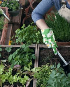 Gardening Apartment Therapy