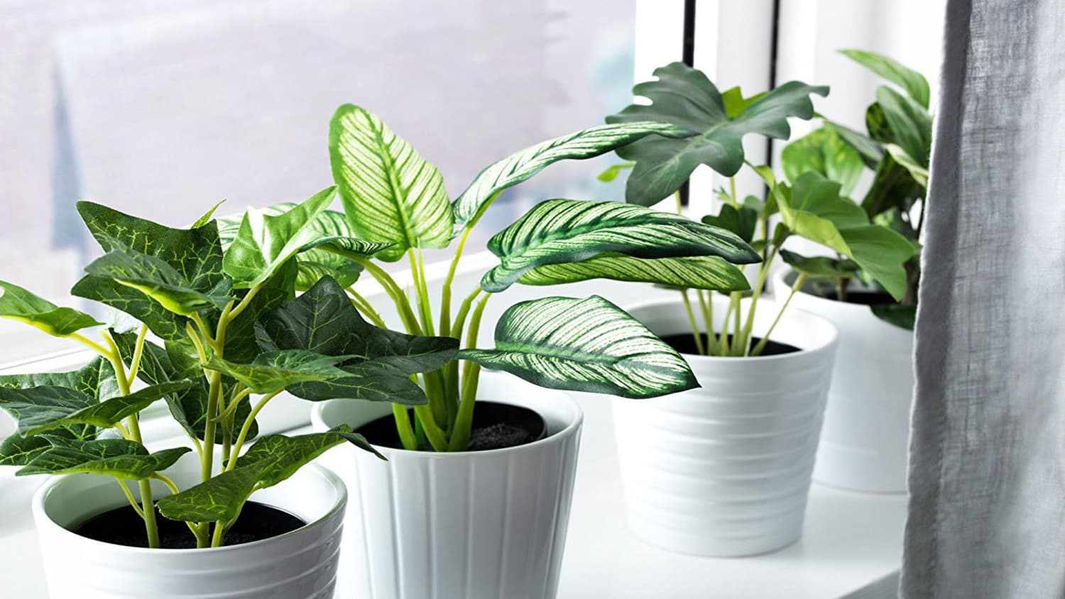Fake Plant Buying Guide How To Pick The Best Faux Plants Apartment Therapy Find over 100+ of the best free tropical leaves images. how to pick the best faux plants