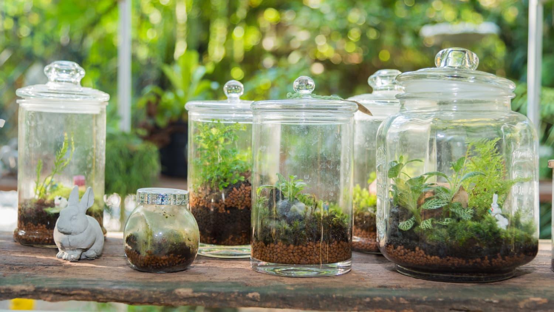 6 Best Terrarium Plants Apartment Therapy