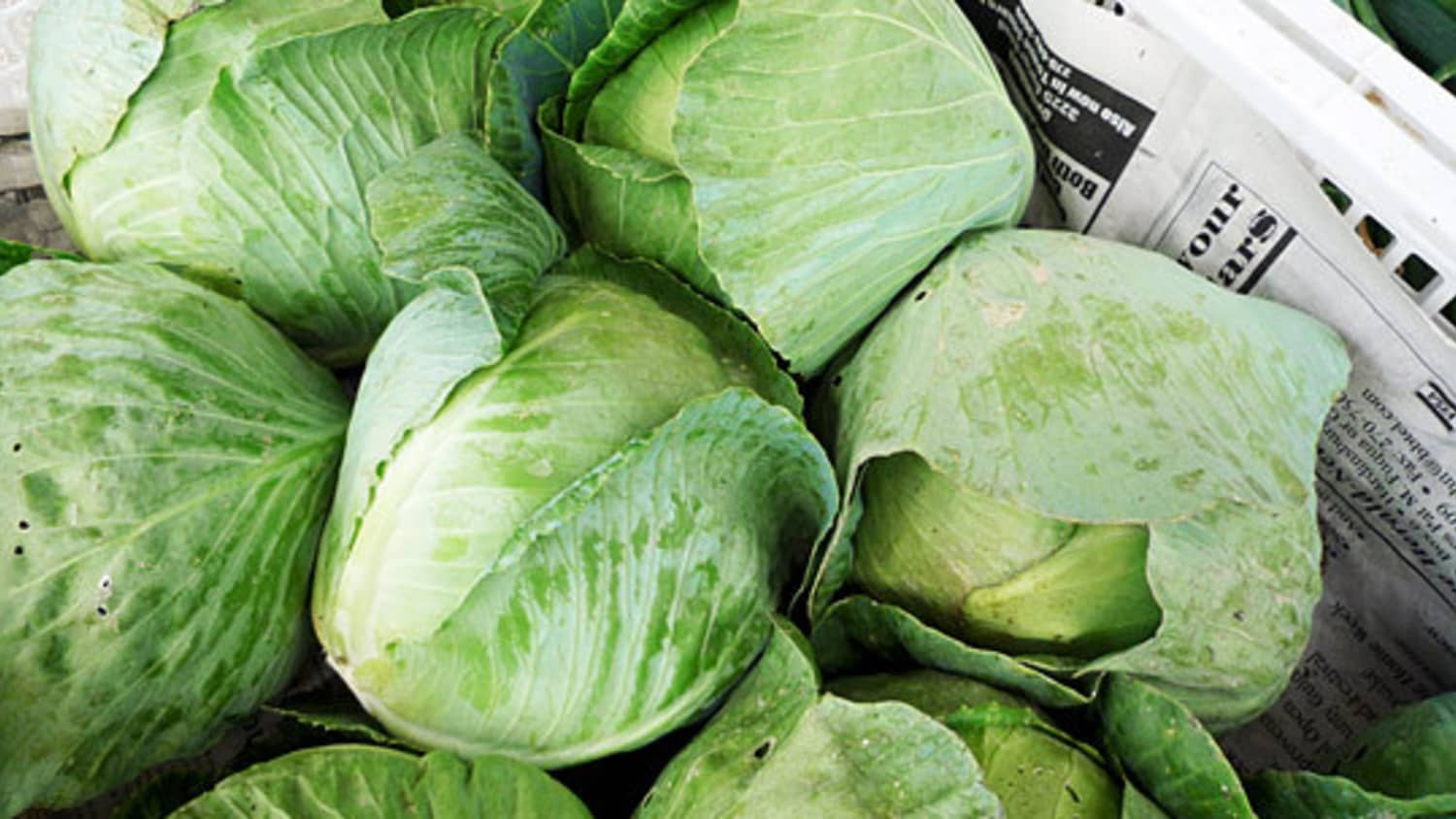 Know Your Cabbages Green Red Savoy Napa And More Kitchn