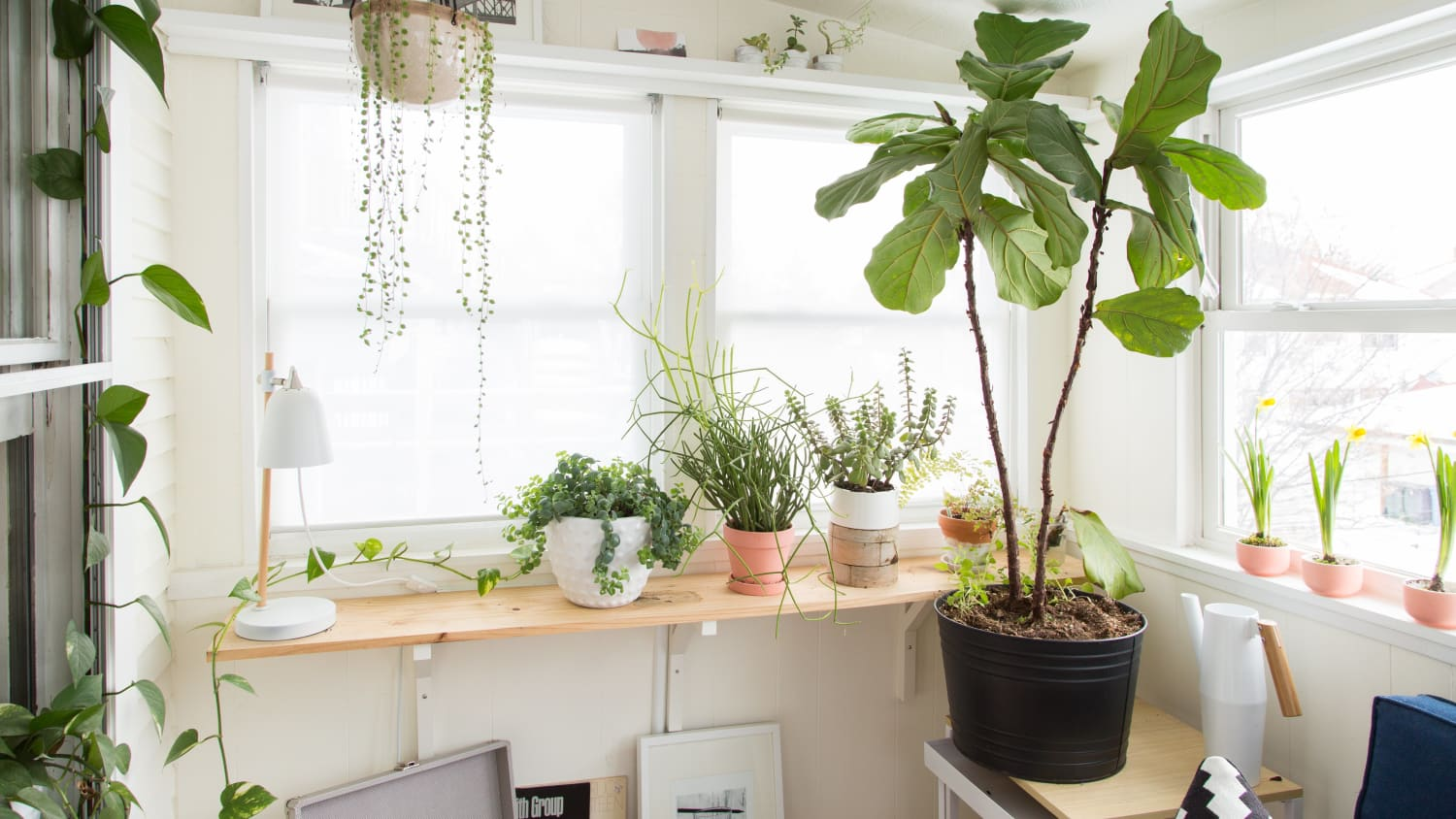 String Of Pearls Plant Care How To Grow Maintain String Of Pearls Succulents Apartment Therapy