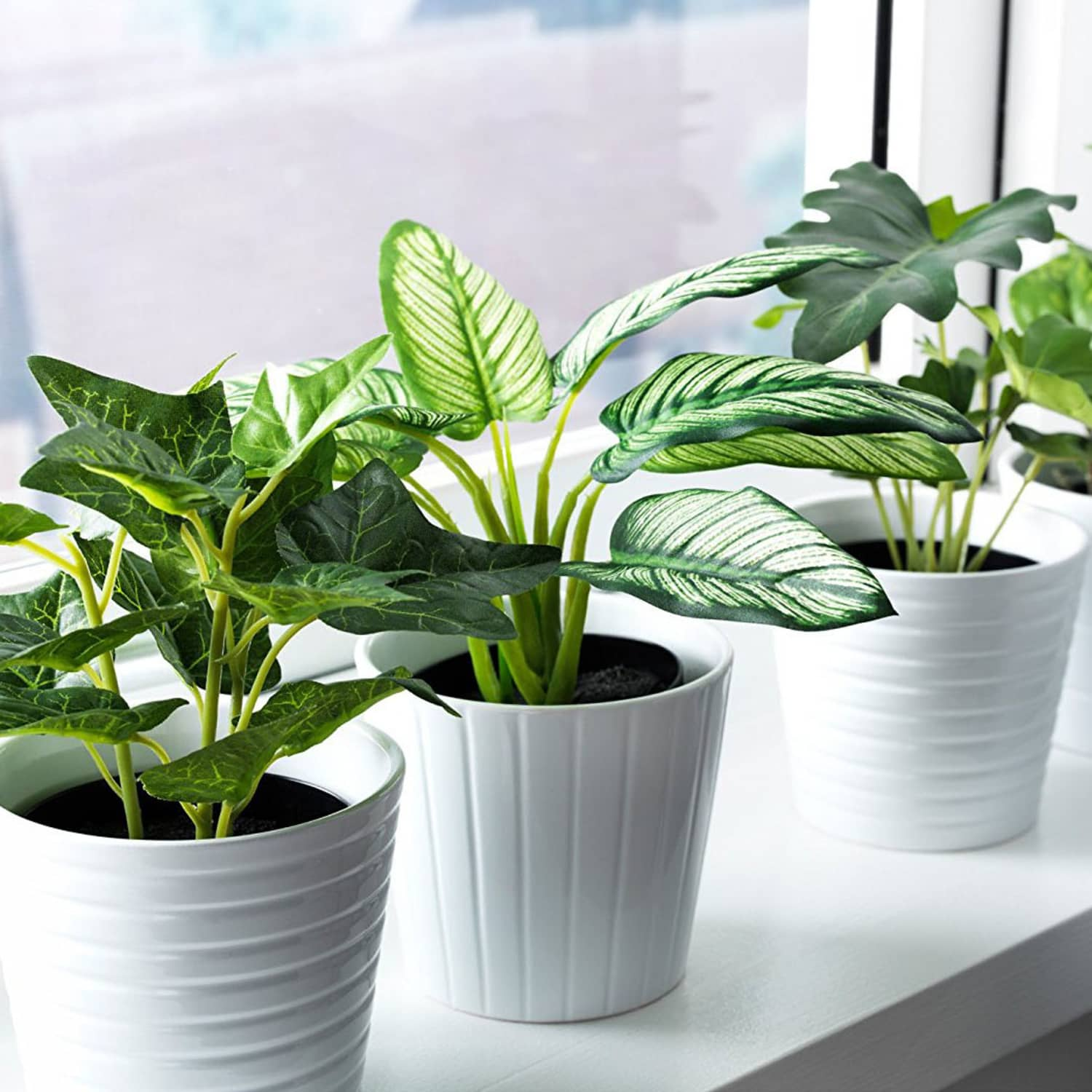 Fake Plant Buying Guide How To Pick The Best Faux Plants Apartment Therapy