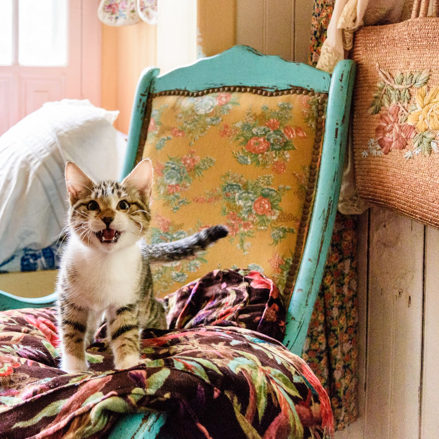 Cat names that go with willow