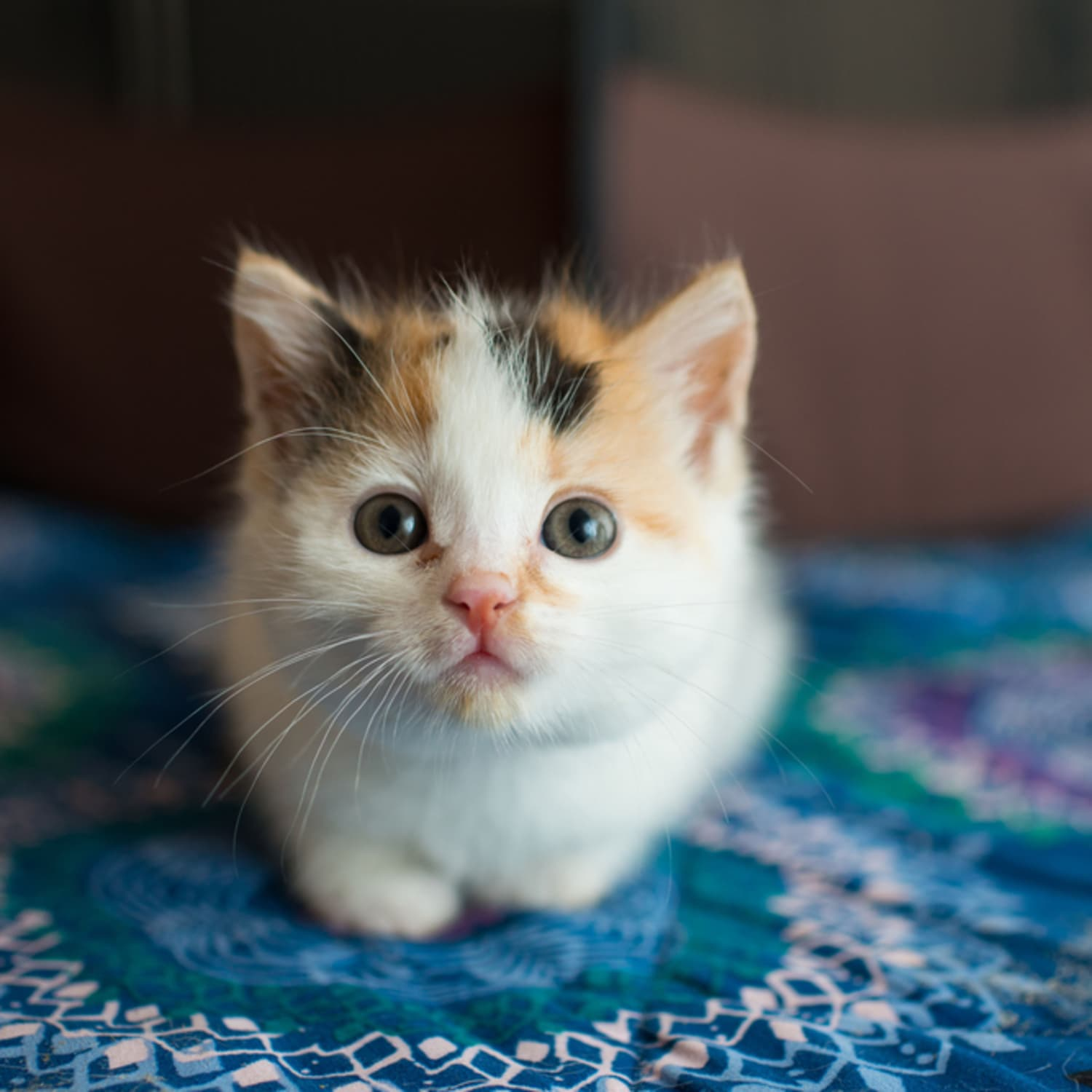 This Kitten Airbnb Is a Cat Lover's Dream Come True