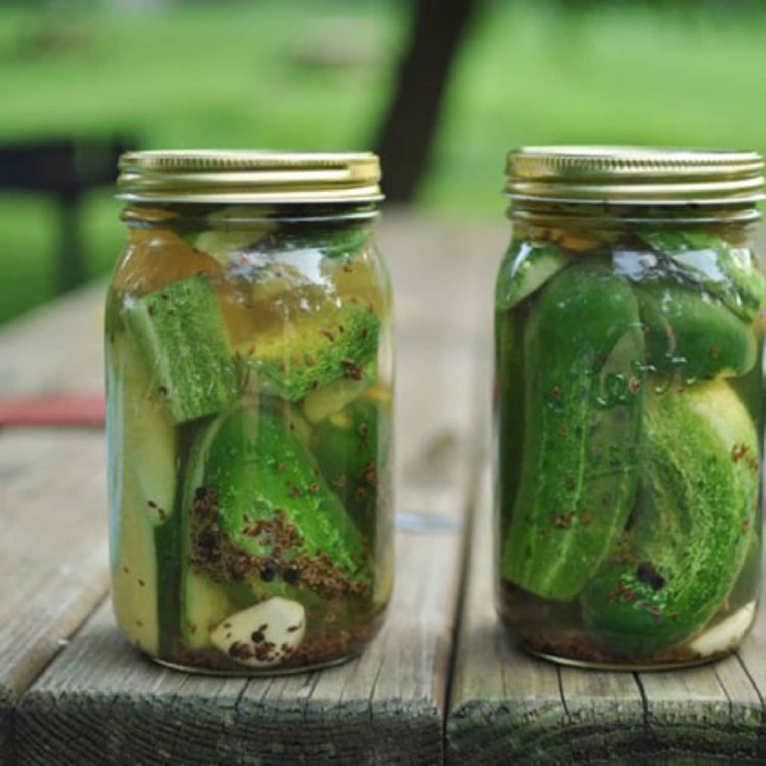 Small Batch Recipe Garlic Dill Refrigerator Pickles Kitchn