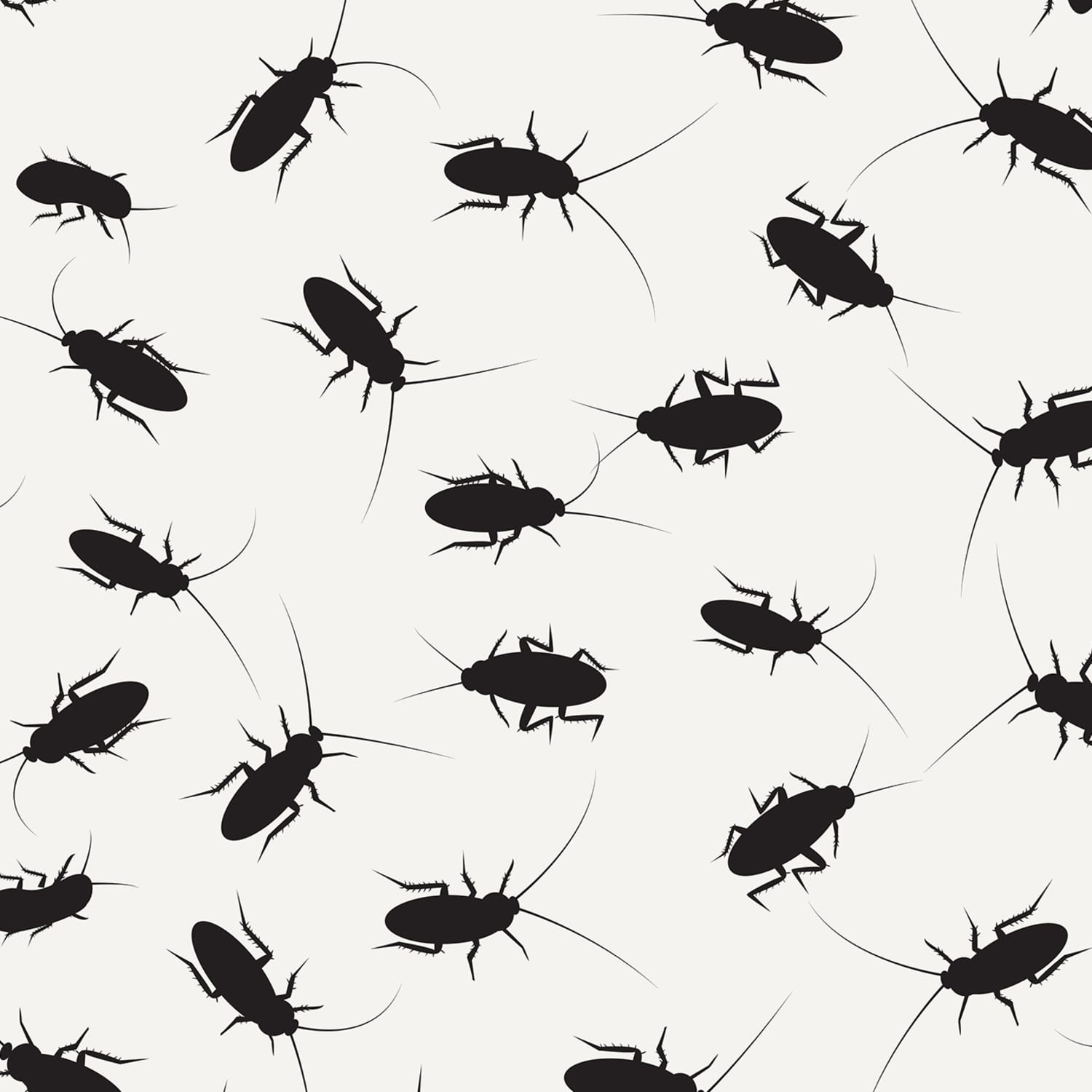 3 Non Toxic Tips For Ridding Your Home Of Roaches Apartment Therapy