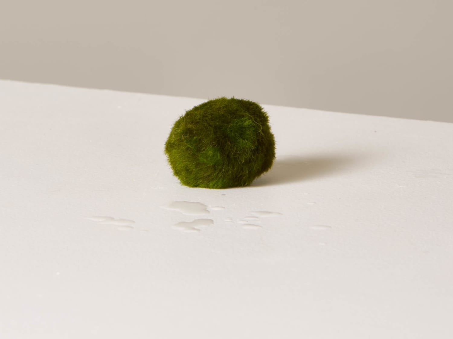 How To Grow And Care For Marimo Moss Apartment Therapy