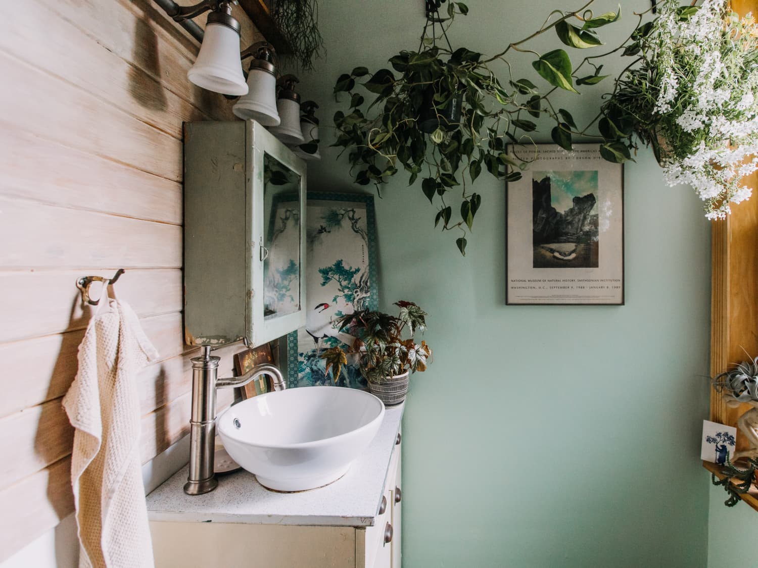10 Best Bathroom Plants Houseplants For Warm Humid Spaces Apartment Therapy