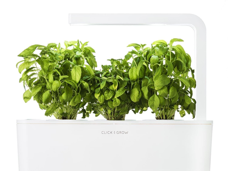 Click and Grow Smart Garden Garden Cress Plant Pods 3-pack