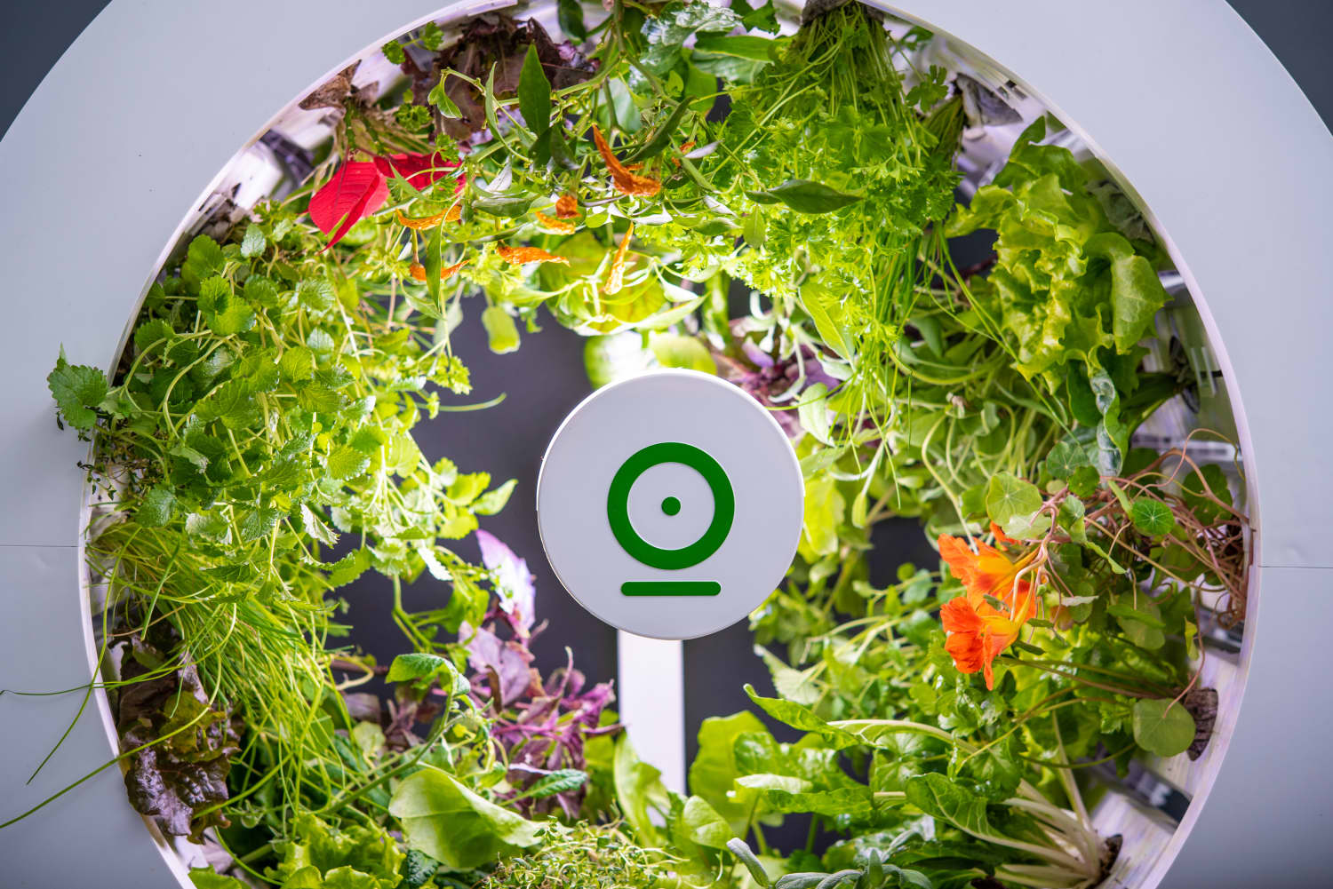 This Indoor Garden Grows Vegetables for You, No Green Thumb Necessary