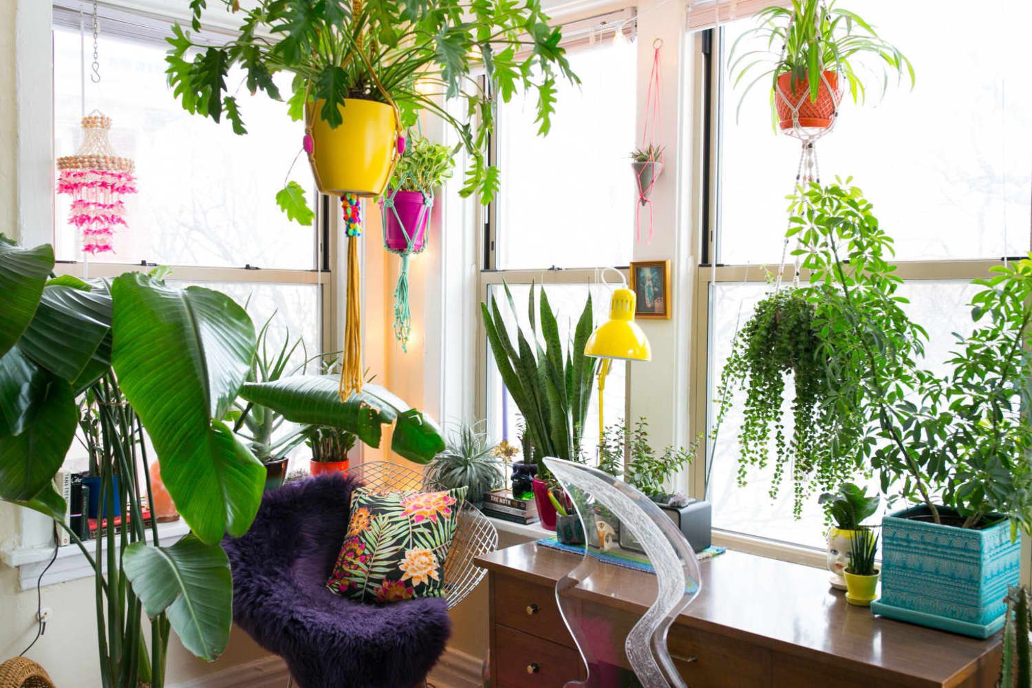 The Renter Friendly Solution for Hanging Plants Without Putting Holes in the Ceiling