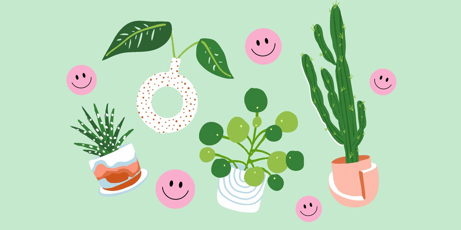 What to Expect When Becoming a Plant Parent
