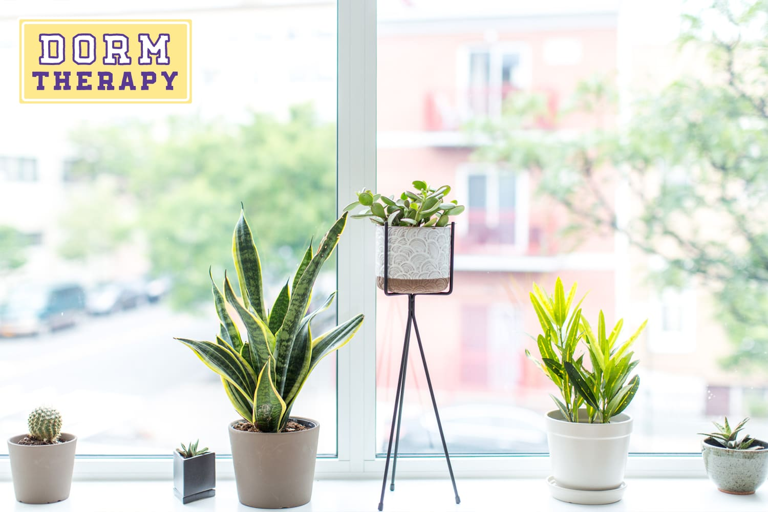 Everything to Know About Keeping Plants Alive in Your Dorm Room