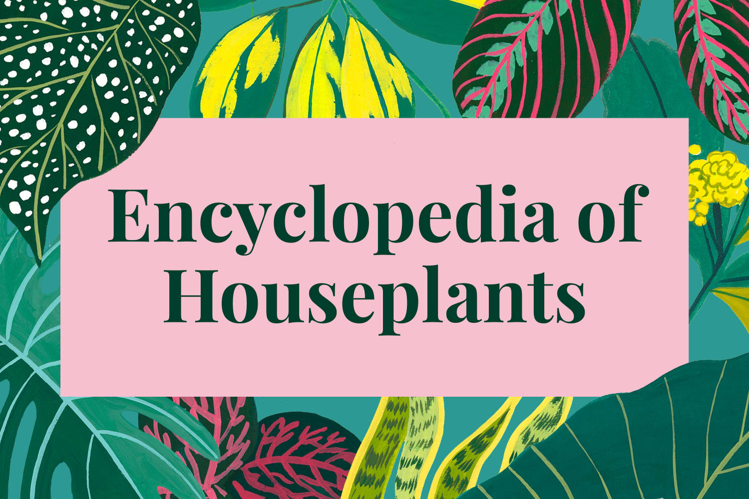 Houseplant Encyclopedia: Complete How-to Guide to 70+ Plant Types
