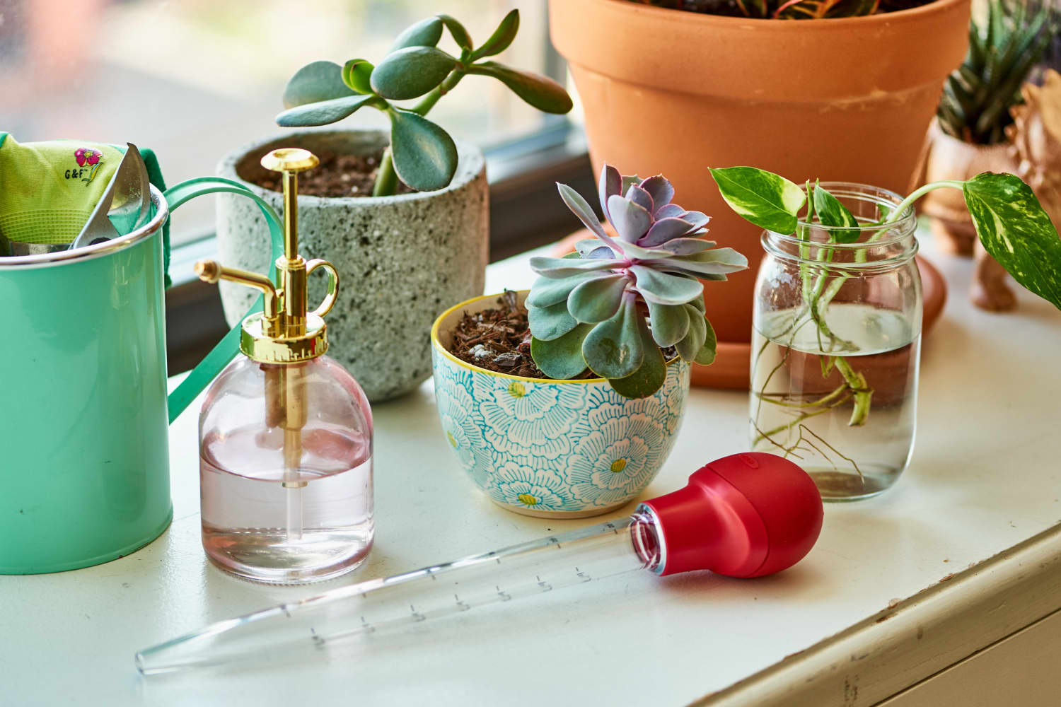 Why You Should Keep a $2 Turkey Baster in Your Plant Care Kit