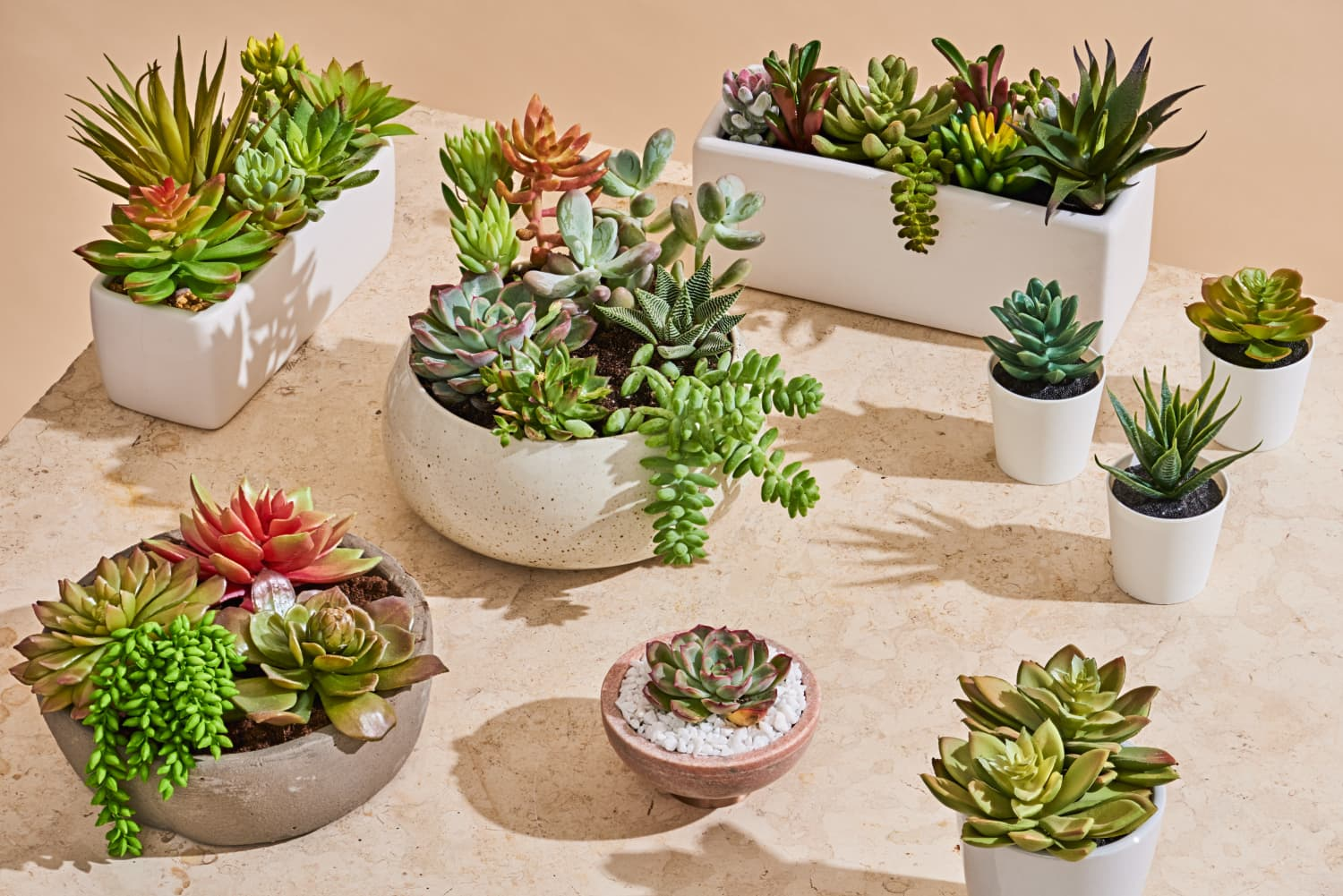 We Ordered the 5 Most Popular Fake Succulents—and This is the Best One