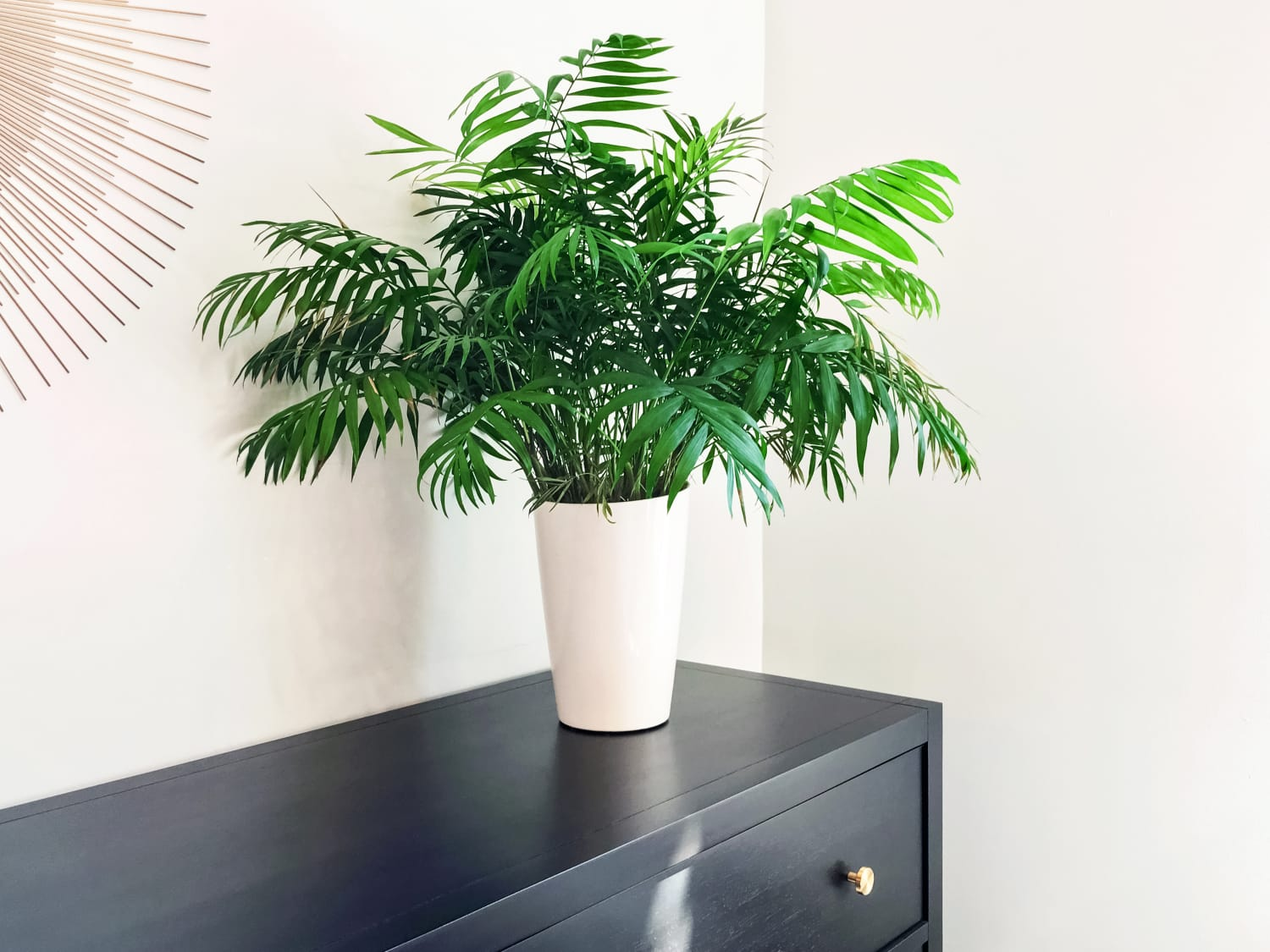 The Difference Between Parlor Palm, Areca Palm, and All Those Other Palms