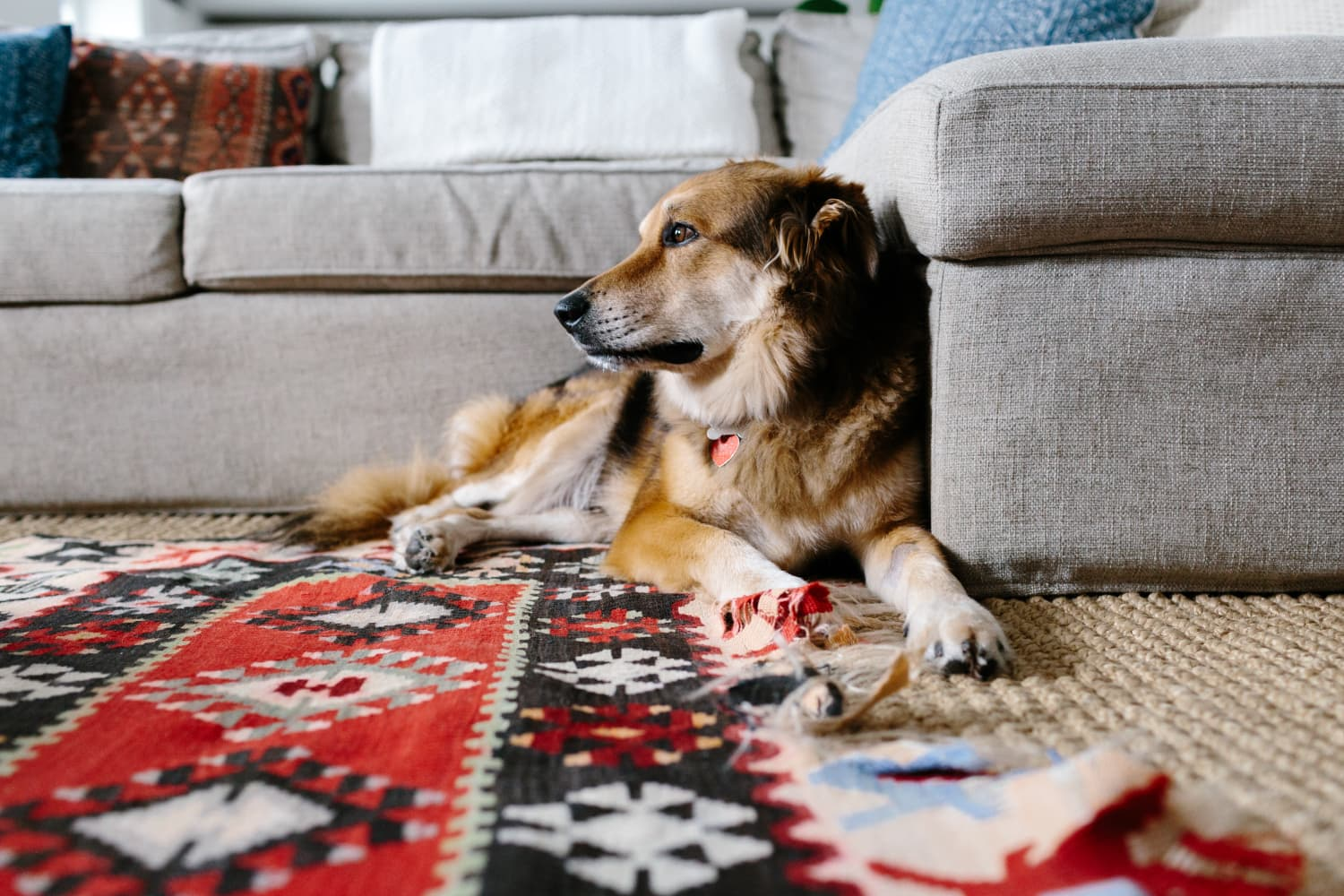 What You Should Look For (and Avoid) When Shopping for a Pet-Friendly Rug