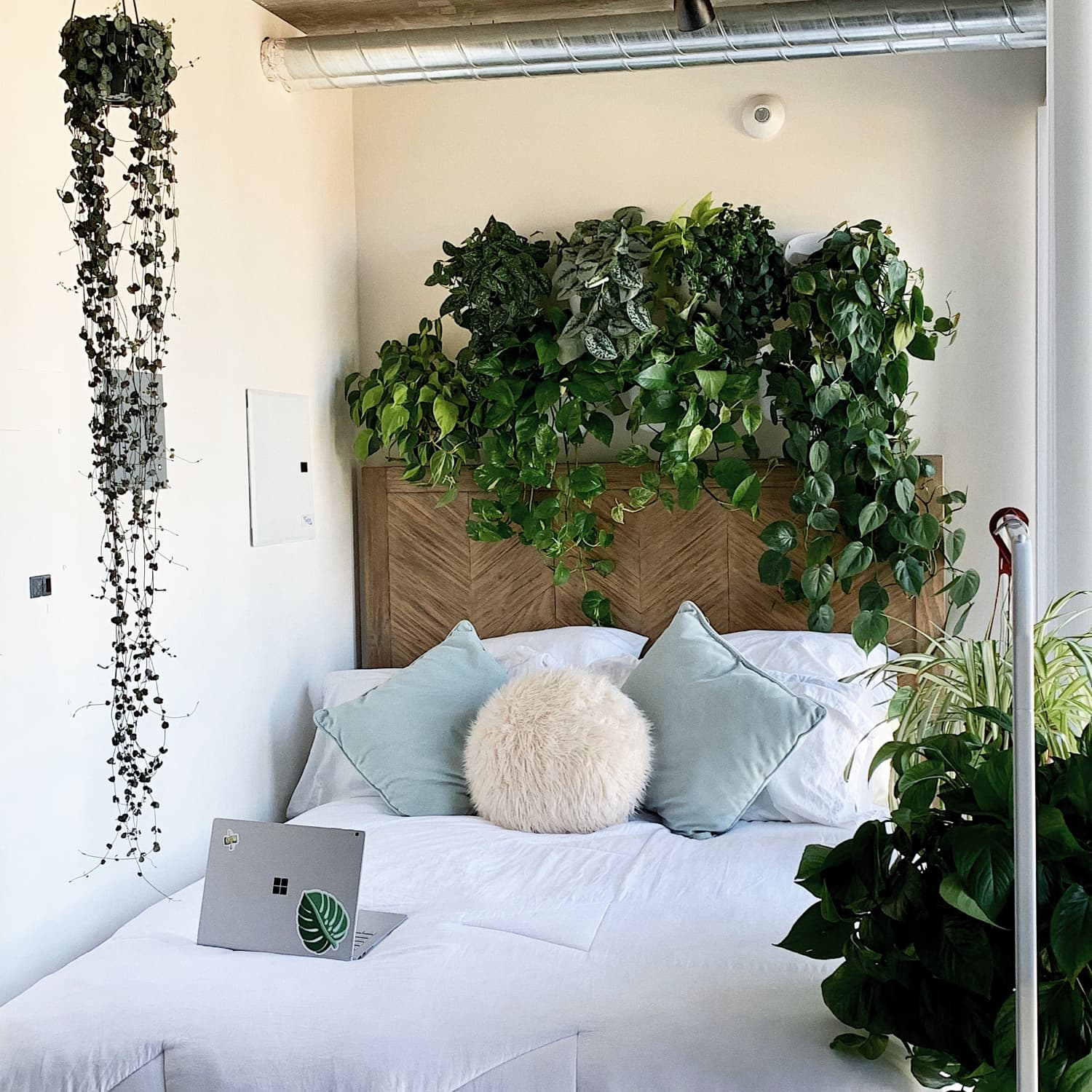 Thanks to 50+ Plants, This 400-Square-Foot Studio Apartment Is Like a Serene Urban Greenhouse