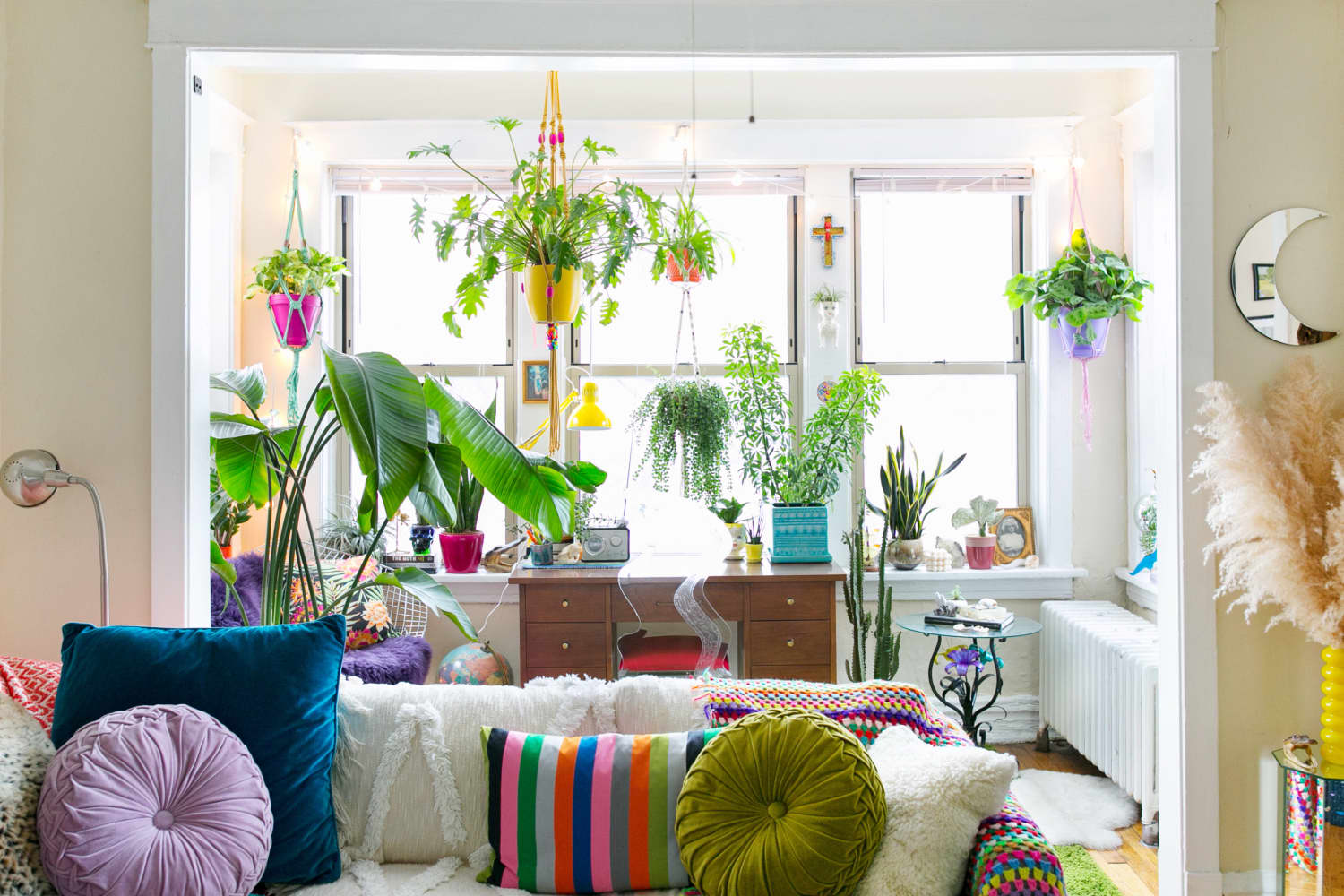 7 Overlooked Plants That Thrive in an Apartment with Overzealous Heat