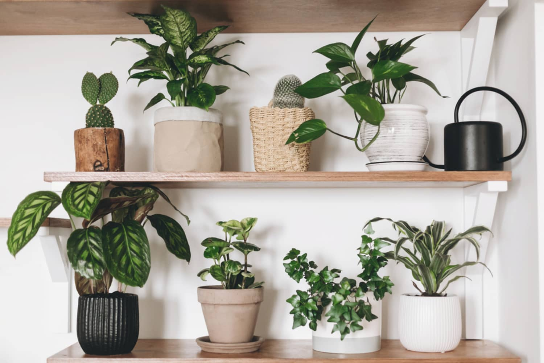 Houseplants  - cover