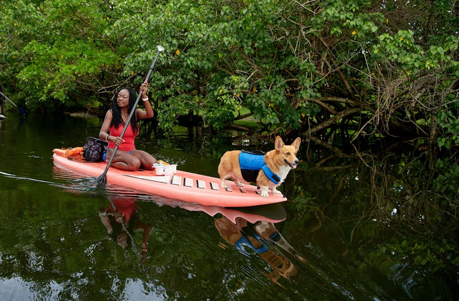 Paddle Boat With Corgis and Observe Arctic Foxes Through Airbnb's New Animal Experiences