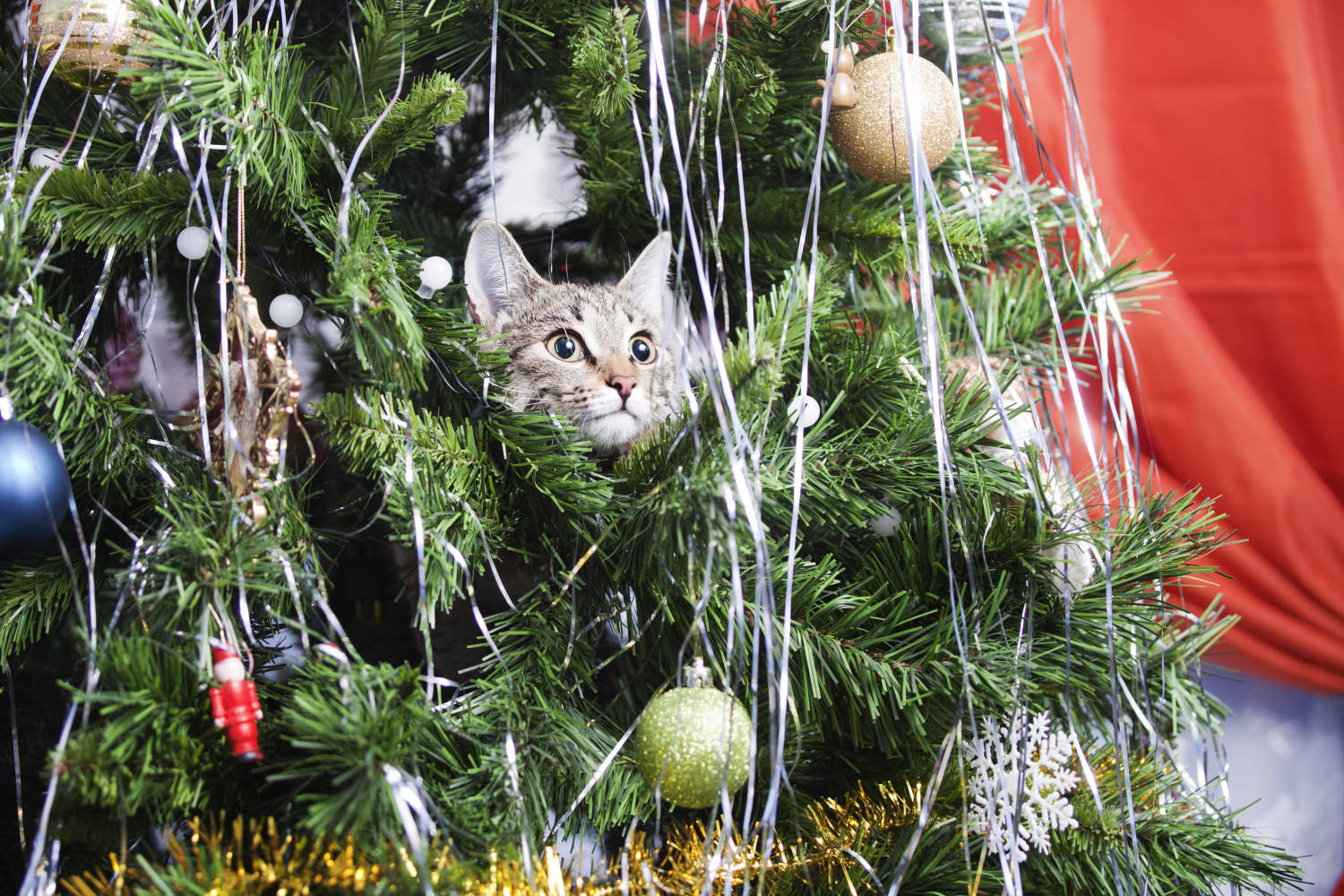 Apparently, Cats Love Climbing in Christmas Trees, and These Pictures Prove It