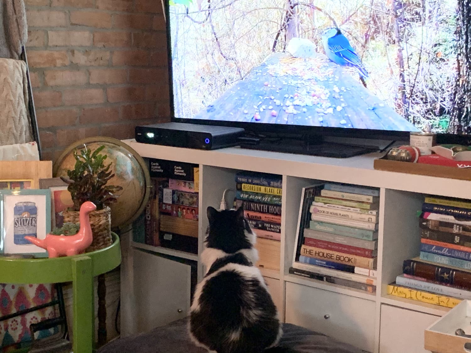 Amazon Prime Has Free 'Cat TV' That You Can Stream for Your Pets