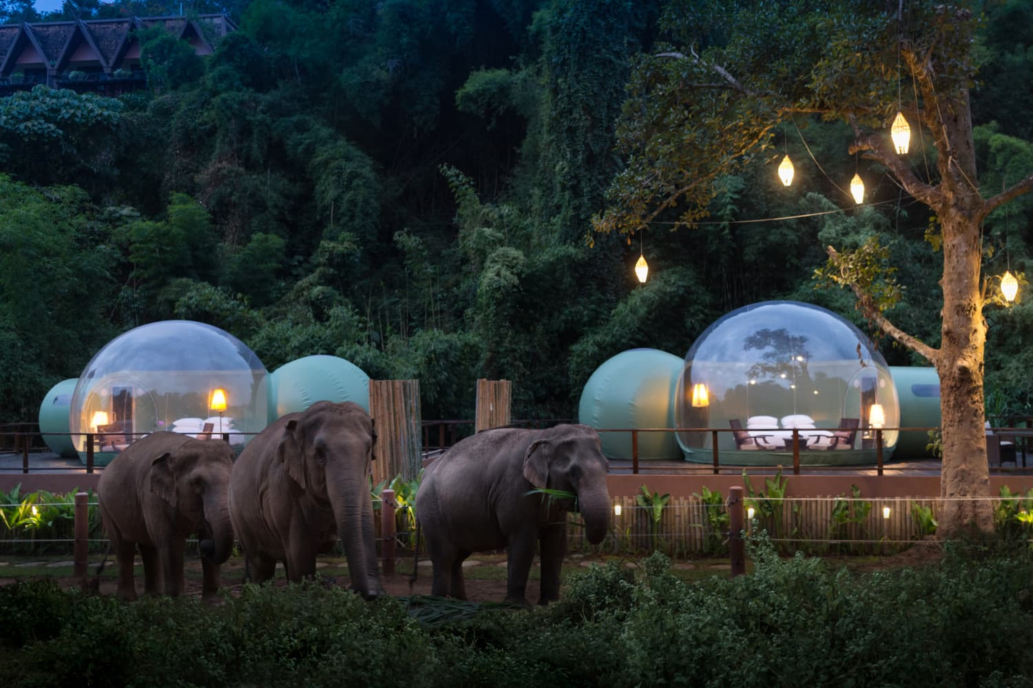 You Can Sleep Alongside Elephants in Thailand's Jungle Bubbles