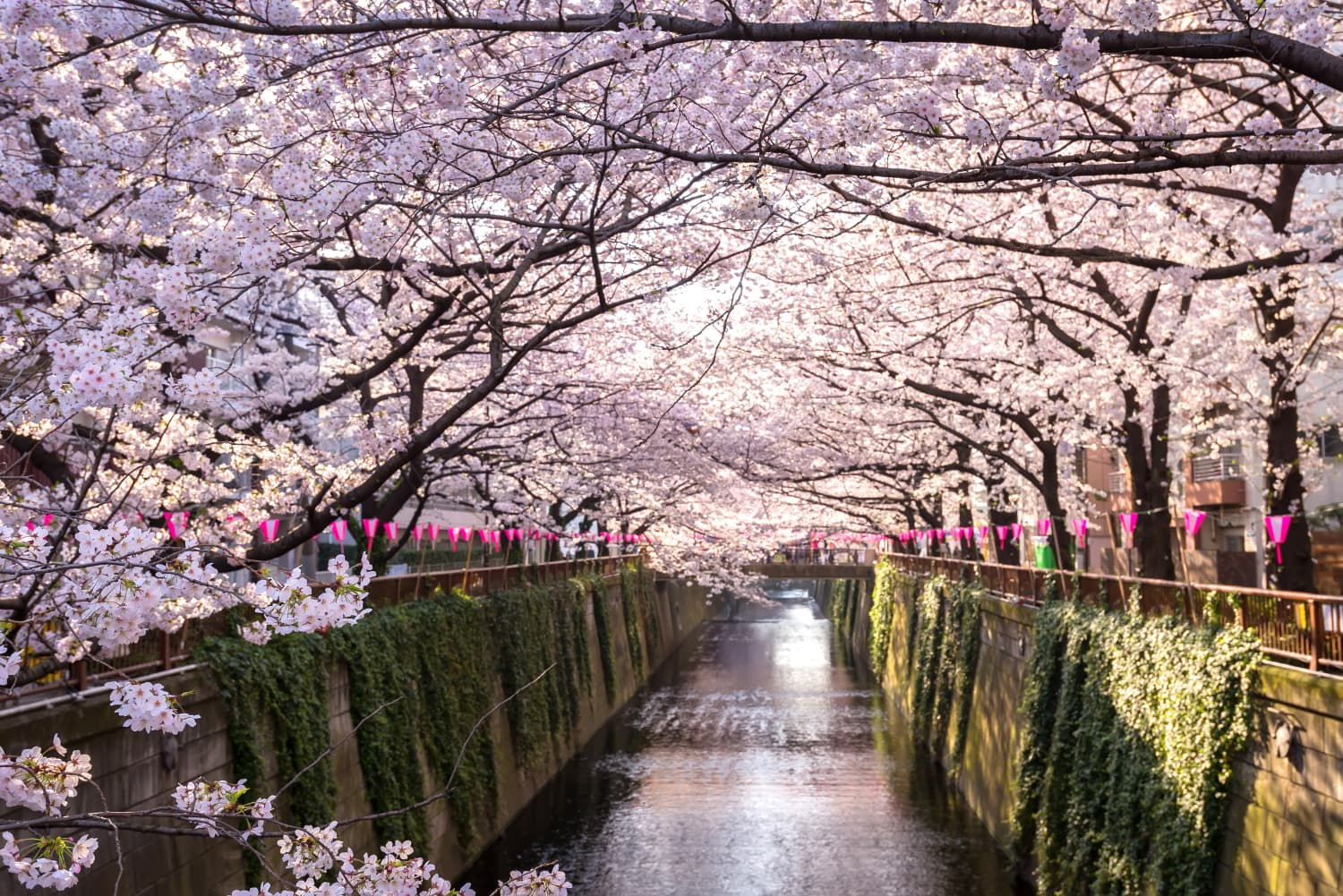From Tokyo to Washington D.C., This Virtual Tour Lets You Visit Famous Cherry Blossom Sites Around the World