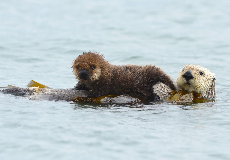 Visit Sea Otters, Penguins, and Jellyfish Through the Monterey Bay Aquarium's Live Videos
