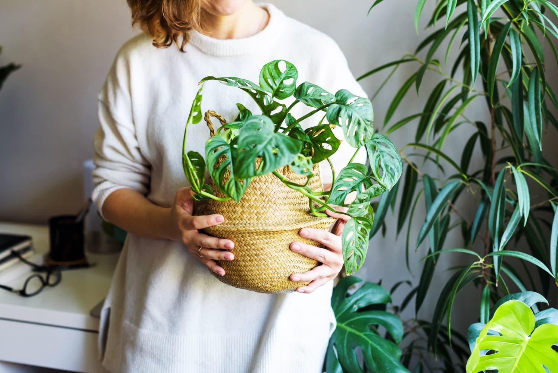 """""""I Sneak New Houseplants Past My Fiancé"""": 14 Plant Parent Confessions"""