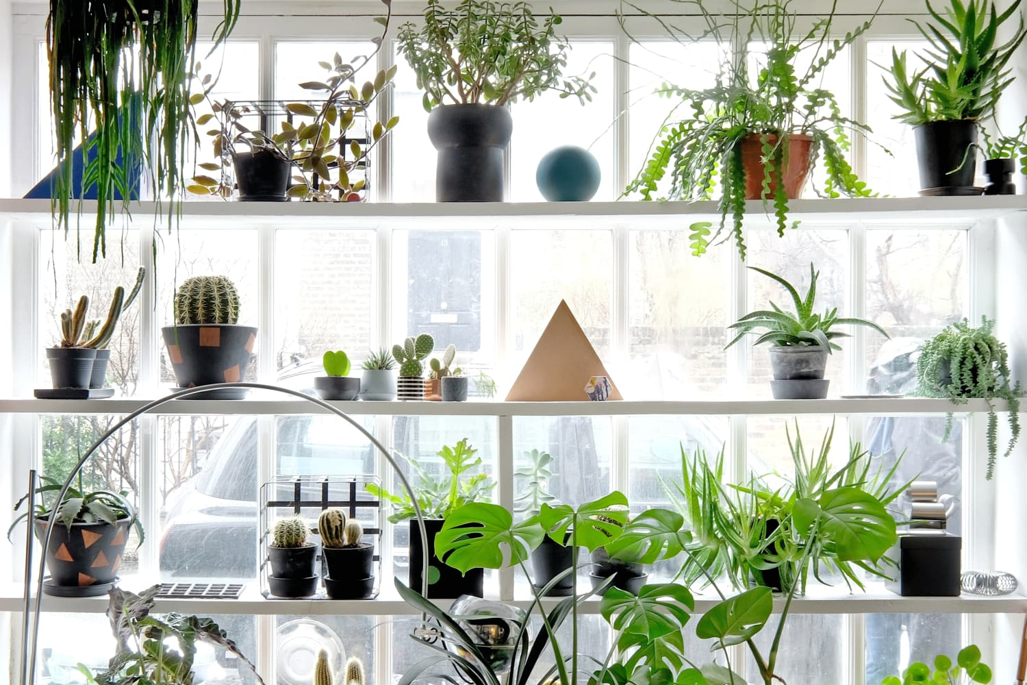 6 Houseplants That Are a Little Wacky, but You'll Want to Have Anyway