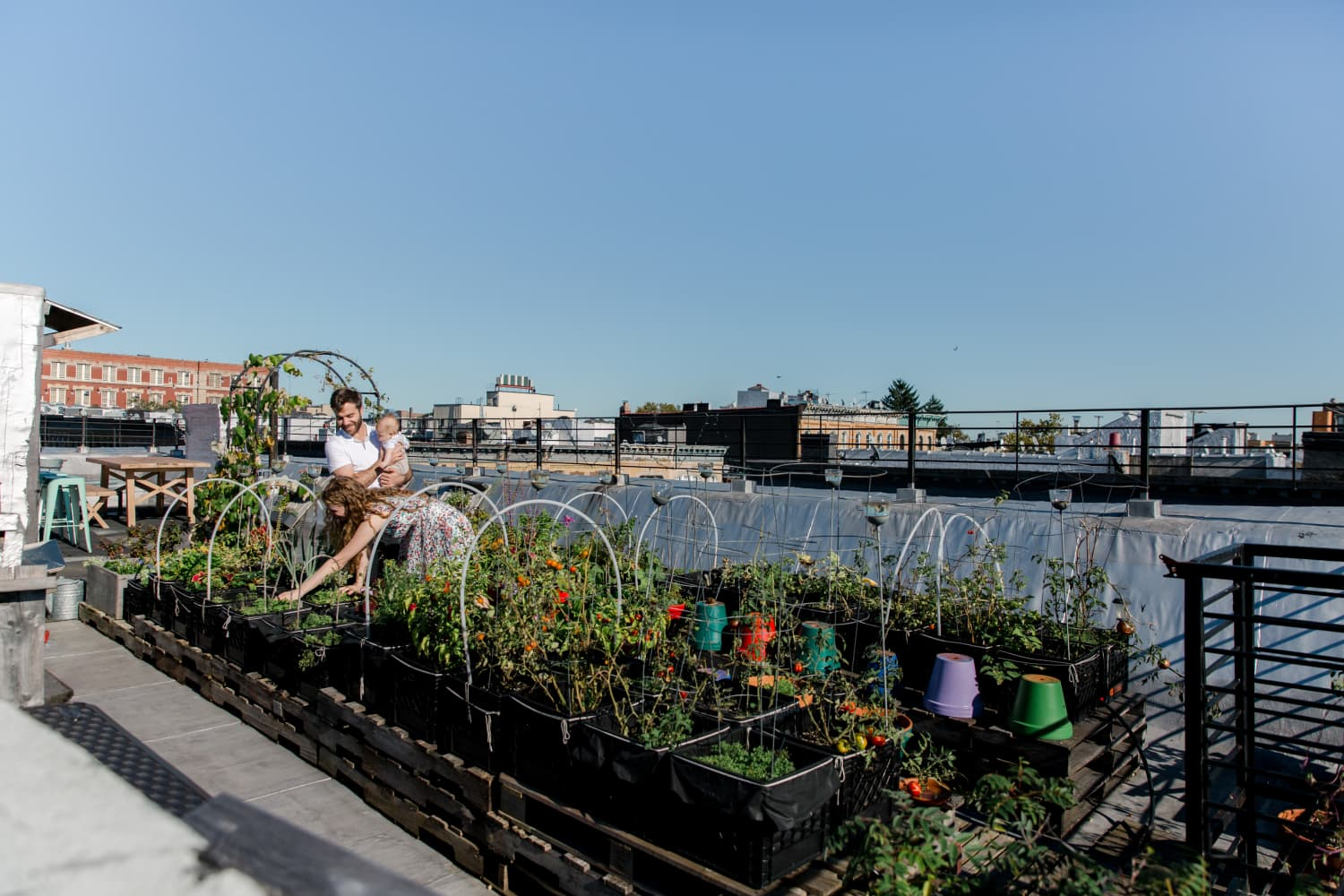 See How Gardening Newbies and Their Neighbors Transformed a Brooklyn Rooftop into an Outdoor Oasis