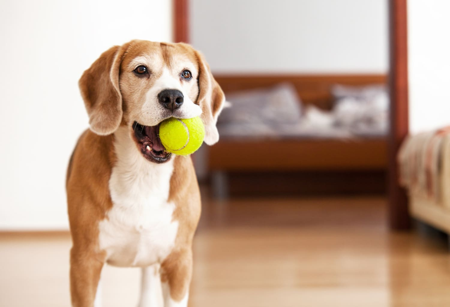 This Ball Lets Your Dog Play Fetch With Themselves