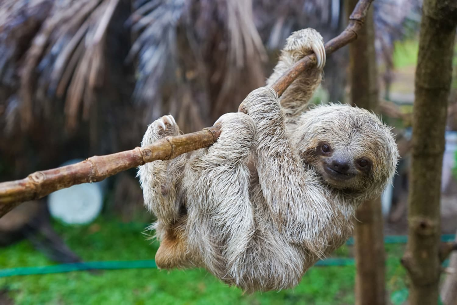 This Sloth Home Decor Collection Will Inspire You to Take a Long Nap