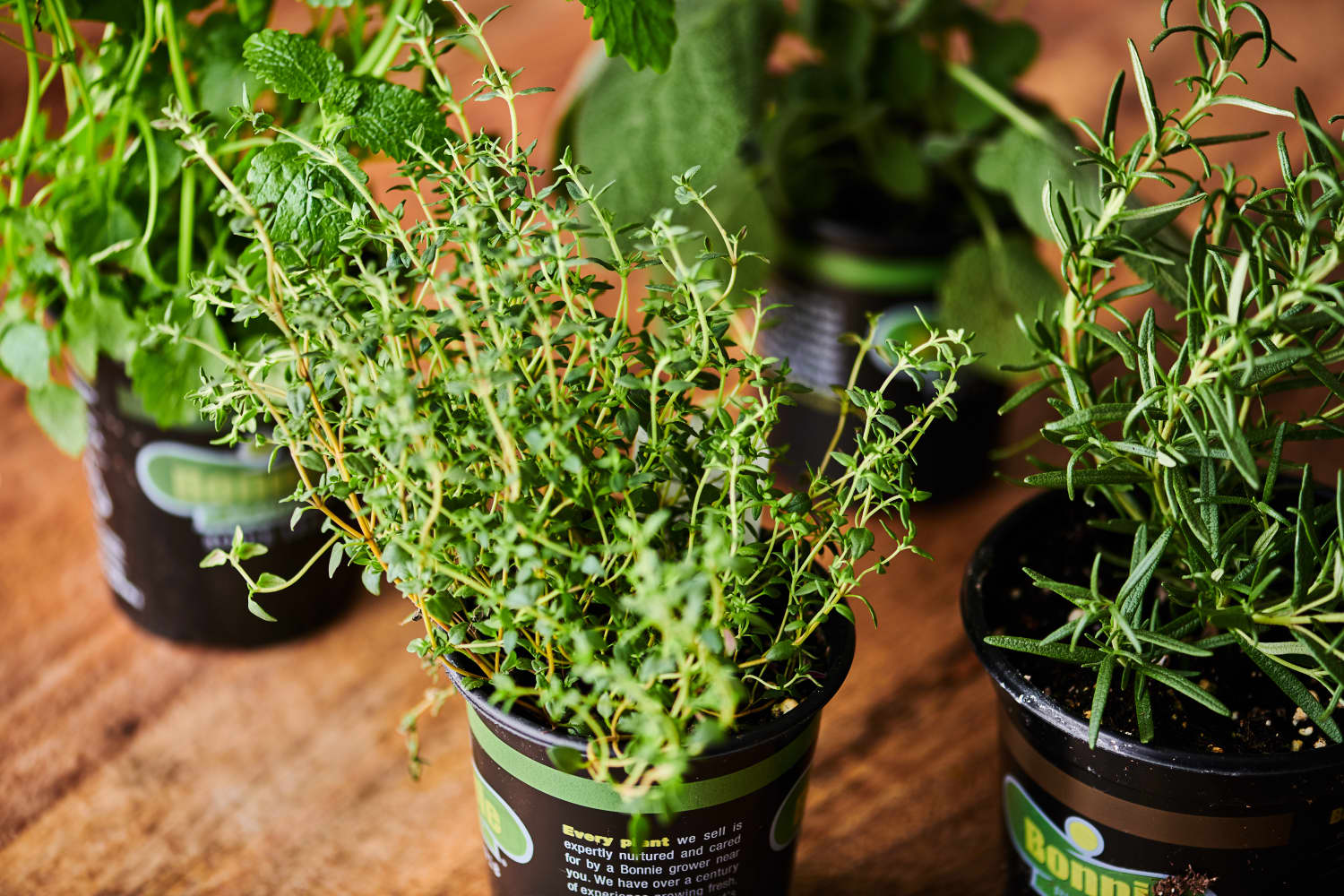 6 Things Everyone Should Know About Buying Potted Herbs from the Grocery Store