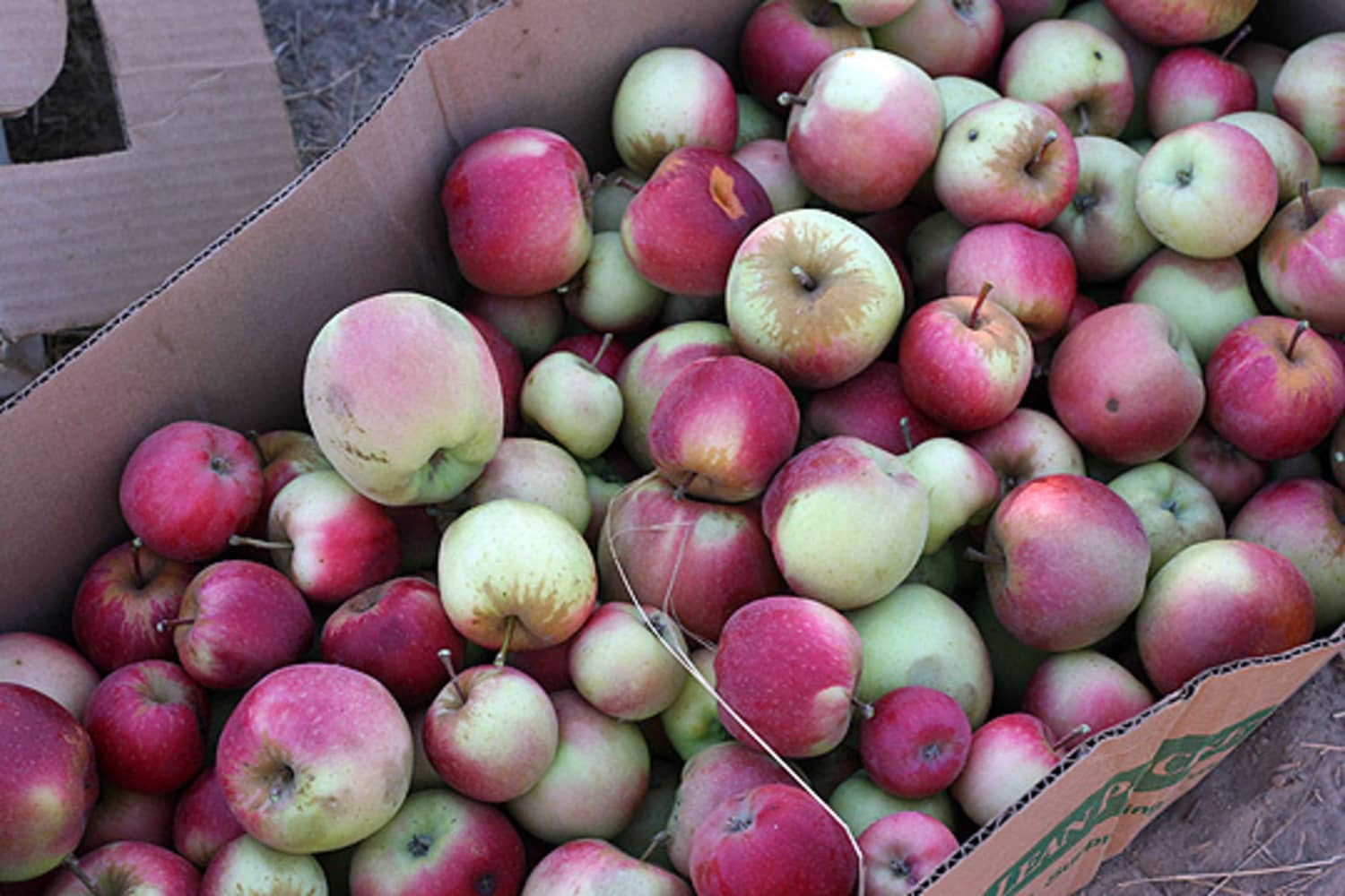 What to Do with the Bushel of Apples You Just Picked (Besides Eat Them)
