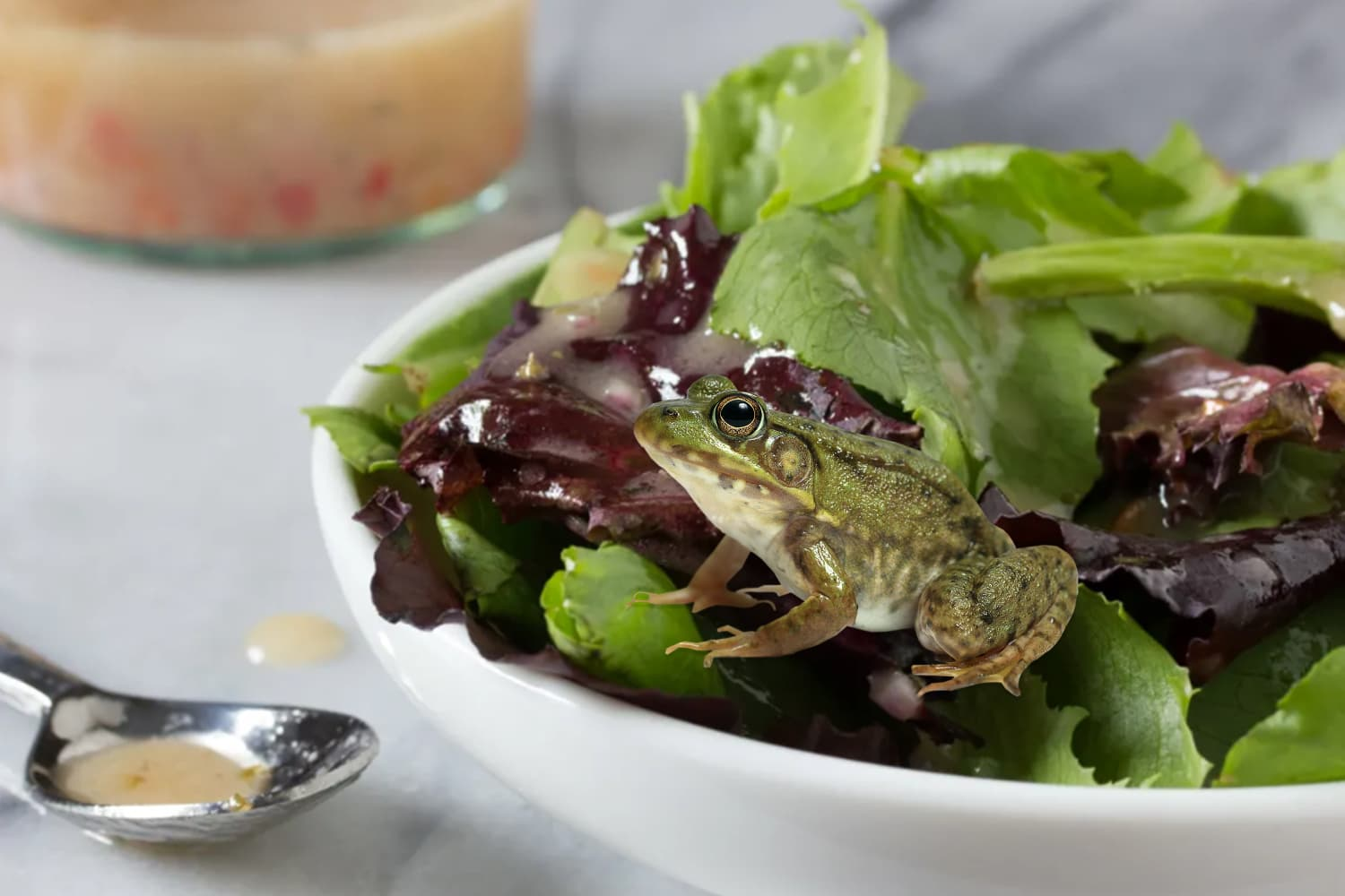 A Live Frog Was Found in These Triple-Washed Organic Salad Greens and Nothing Is Sacred Anymore