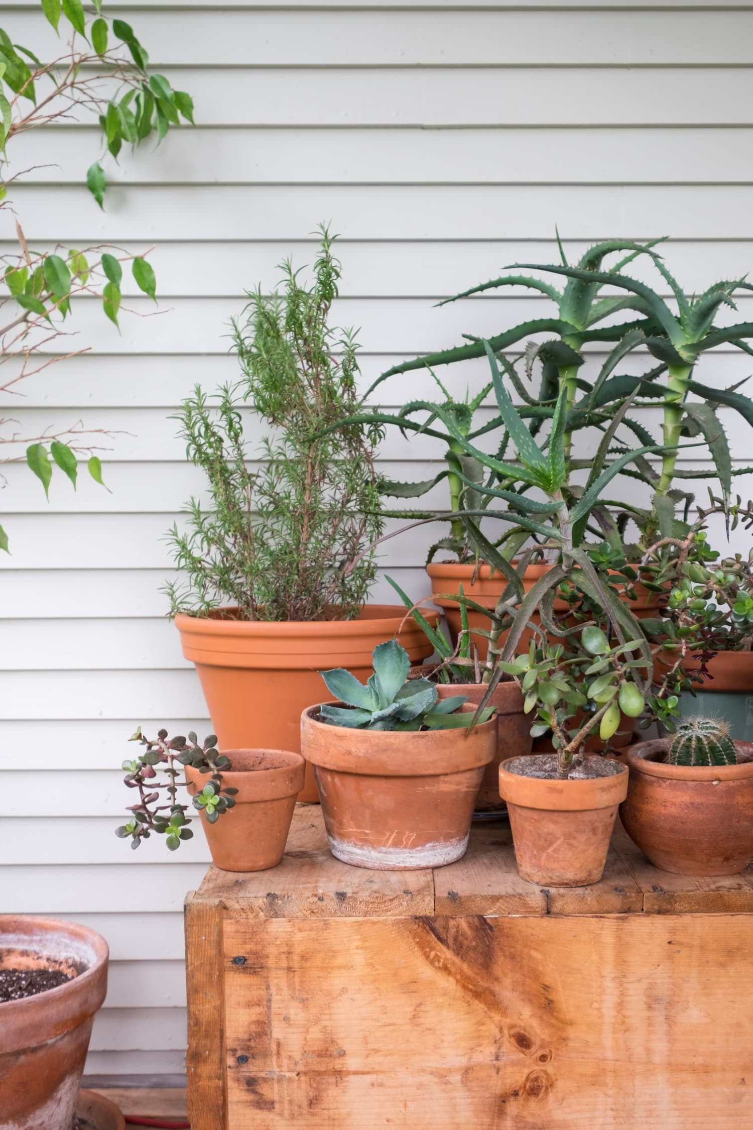 6 Essential Tips for Container Gardening