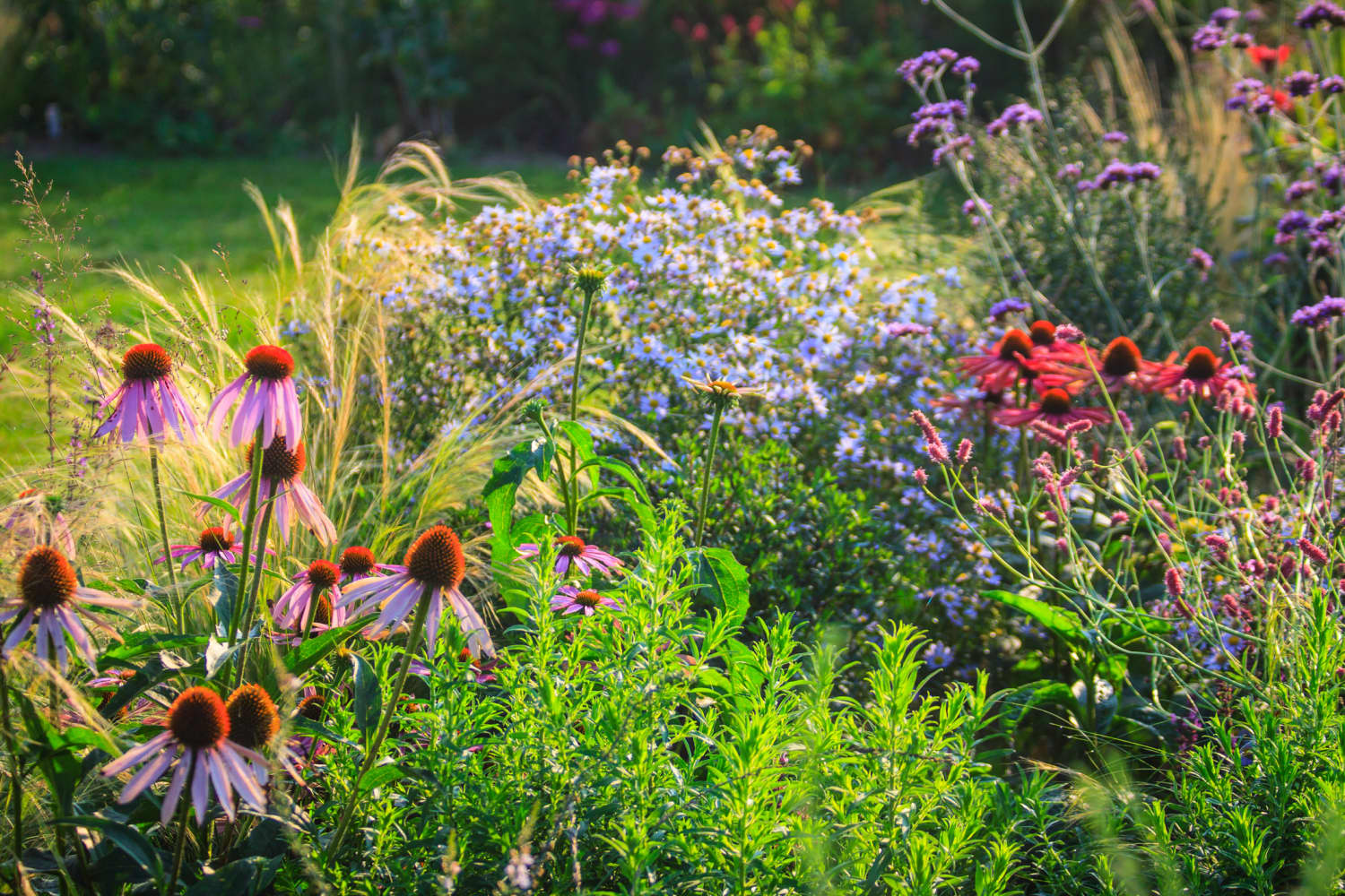 Jumpstart Your Spring Garden By Planting These Colorful Blooming Perennials