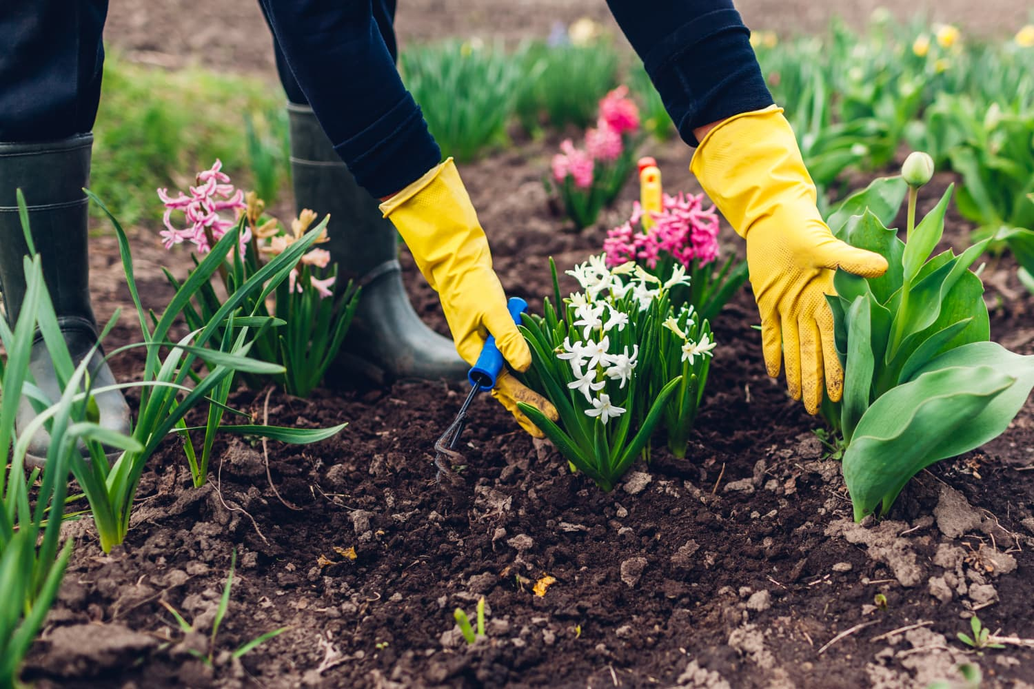 How Gardening Completely Changed The Way I Think About 'Home'