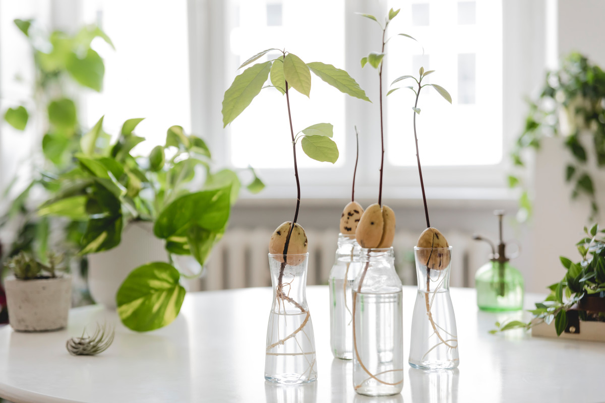 7 DIYs to Make You Feel Connected to Nature — Even If You Have No Outdoor Space