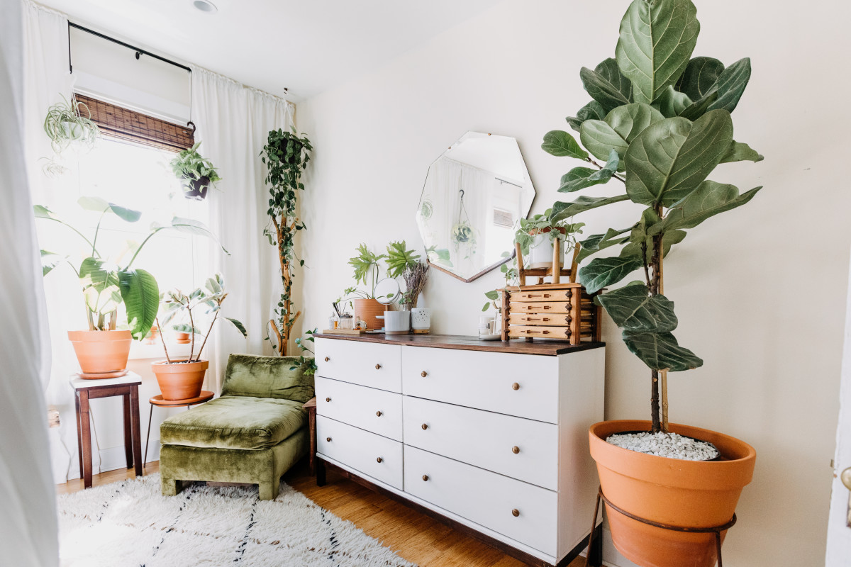 5 Things Experts Want You to Know About Moving Your Plants to a New Apartment